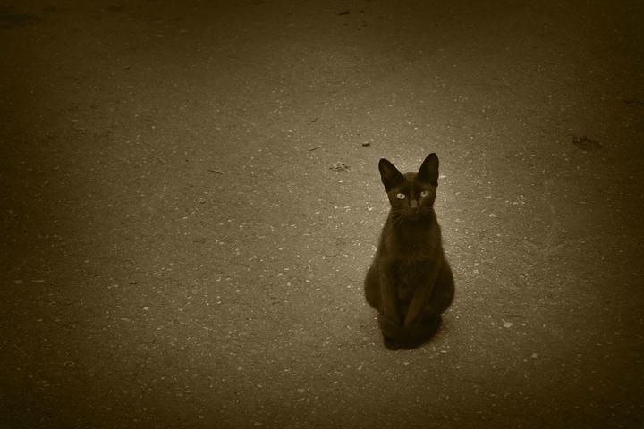 The cat - Iren Darque