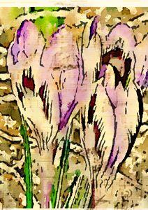 Flowers - MrWhite