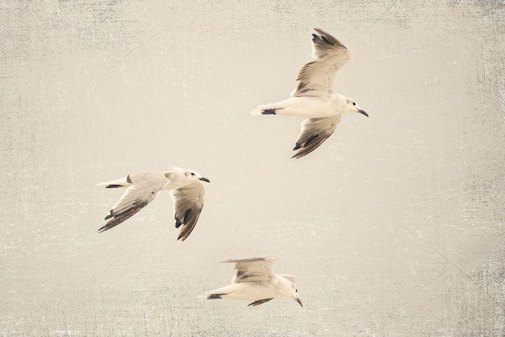 Birds of a Feather - Lilu & Bear Fine Art Photography