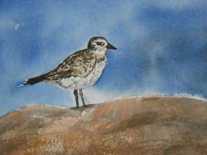 Shore Bird at the Beach - Joyce Lapp
