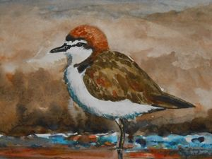 Plover at the Shore - Joyce Lapp