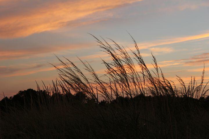 Delaware Beach - Joyce Lapp