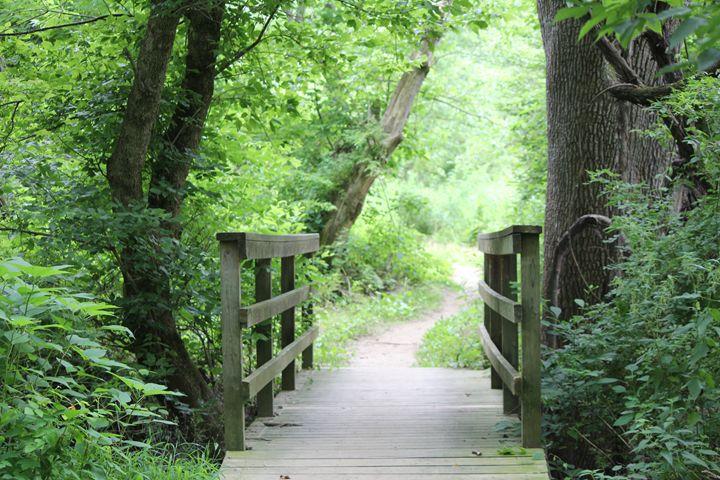 Bridge Light Path - Joyce Lapp