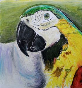 Cheerful Parrot