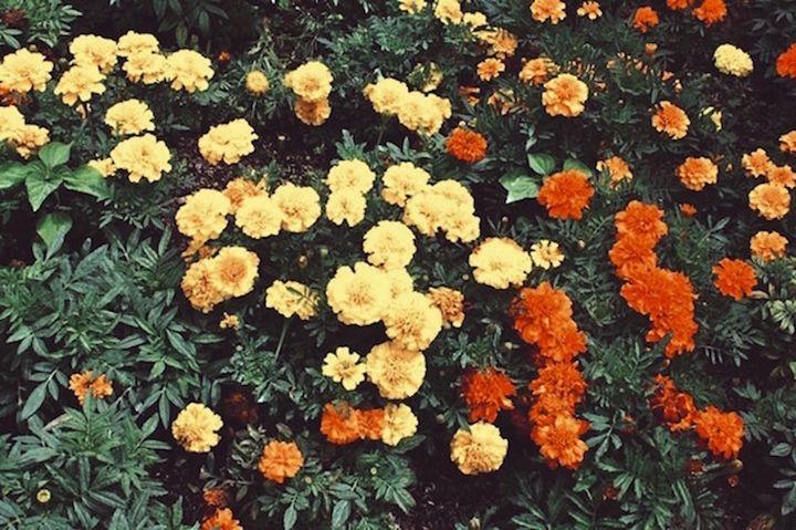 Summer Flowers - InezAnette