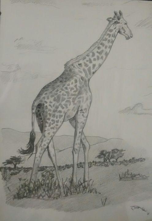Wild Savanna - Goodmans
