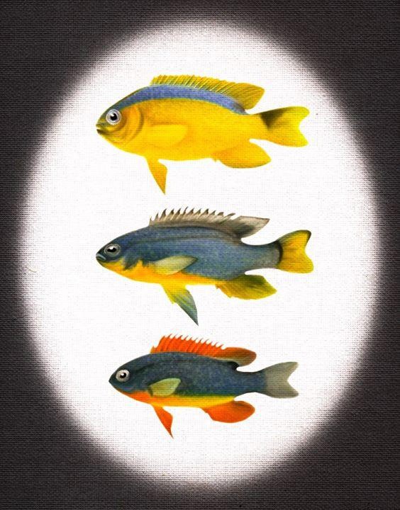 Fish display - Crazy_fallen_art