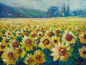 Sunflower Field - Helen Blair