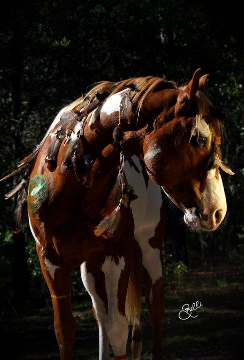 Warrior Horse - Photography By Billi