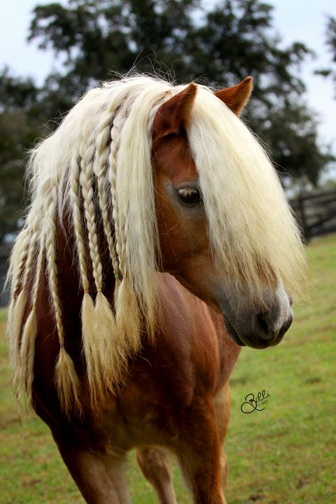 Braided Beauty - Photography By Billi