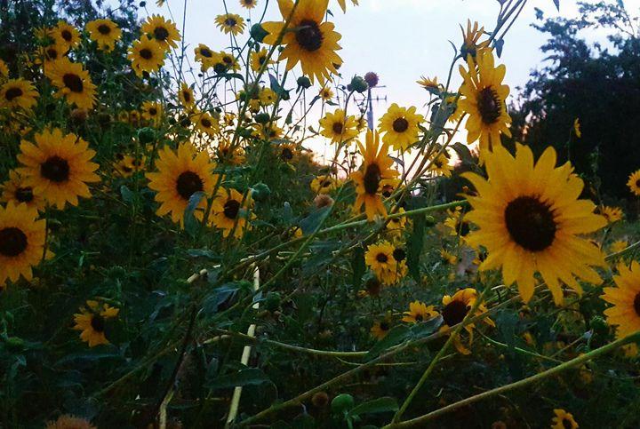 Van Gogh's summer - Brandy Harris