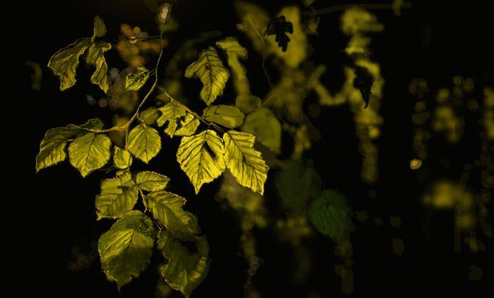 Light against dark - sultana's art