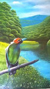 Green Wilson's Bird of Paradise