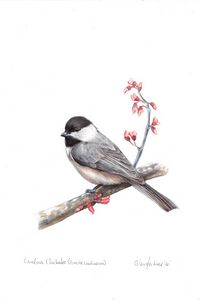 Carolina Chickadee - Archival Quality Prints