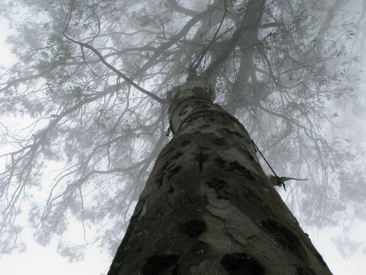 Misty Tree - SoumitraChatterjeePhotography