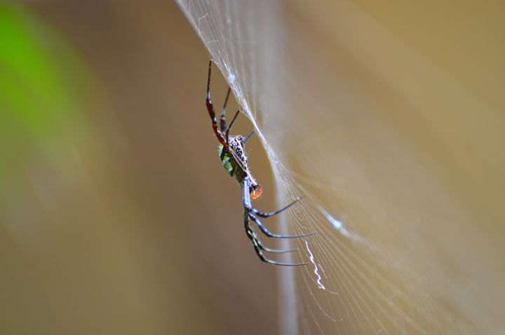 The Webmaker - SoumitraChatterjeePhotography