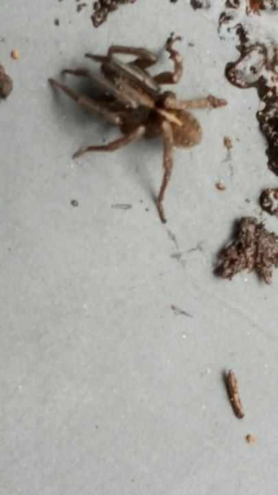 Arachnid - James M. Piehl