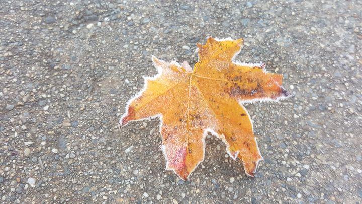 Frost border on a leaf - James M. Piehl