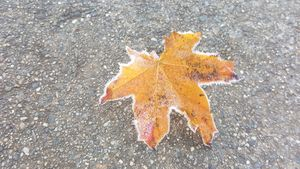 Frost border on a leaf