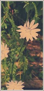 Simple flower photo