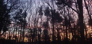 Early winter sunrise