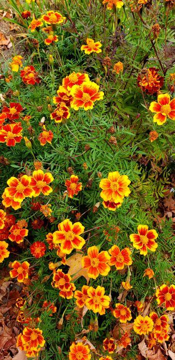Orange flowers - James M. Piehl