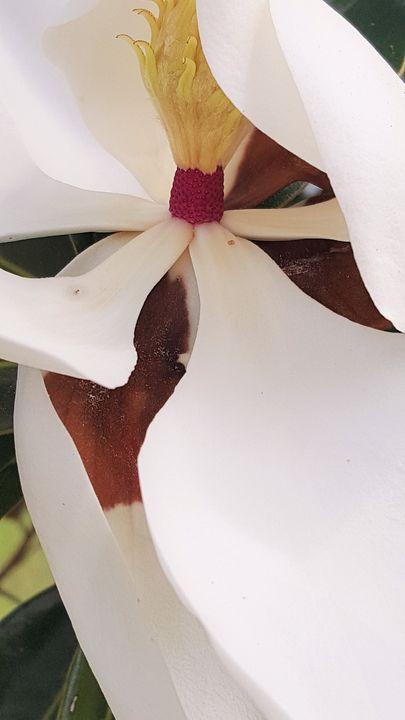 Flower closeup - James M. Piehl