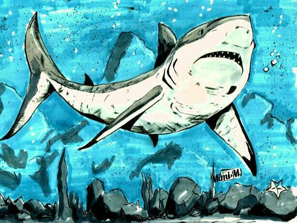Shark - My Little Pretties