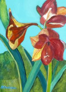 Amaryllis - Hally DeCarion's Paintings