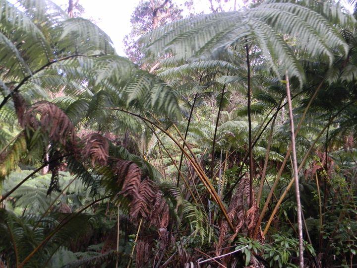 Jungle - paradise