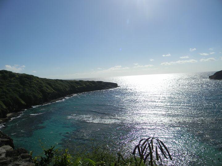 Tropical shoreline - paradise