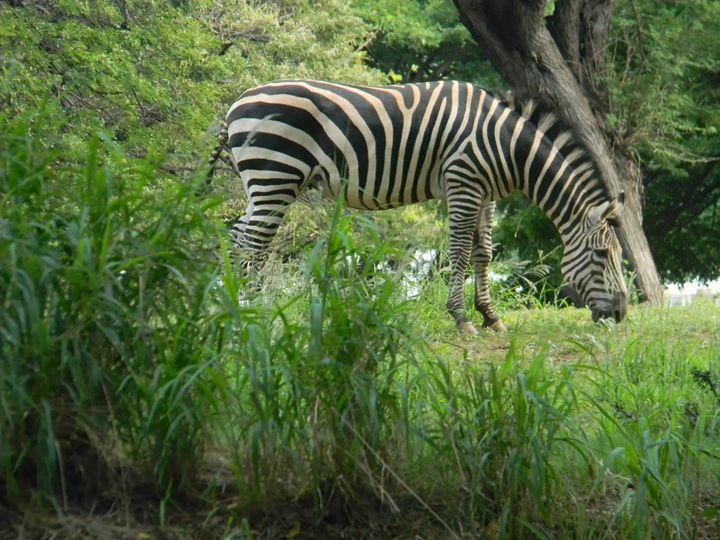 Animal - paradise