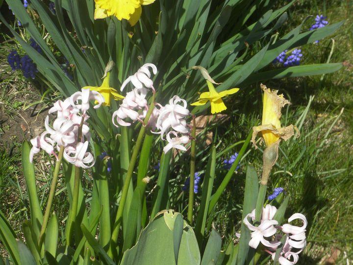Assorted Flowers in a Garden - Gail Cavanaugh Art