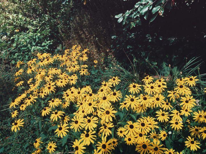 Yellow summer - Carol-Ann Taillefer