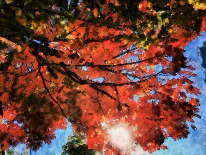 Autumn light! - Carol-Ann Taillefer