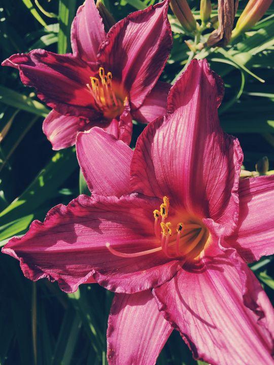 Lilies - Carol-Ann Taillefer
