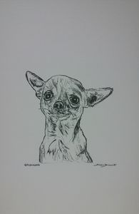 Original Chihuahua Dog Drawing