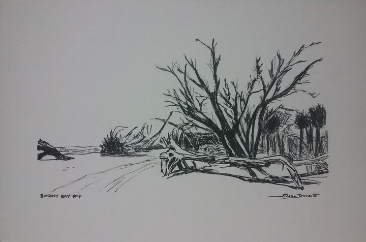 Original Botany Bay Drawing - Susan Dunn