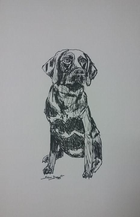 Original Chocolate Lab Drawing - Susan Dunn