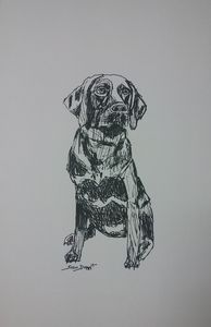 Original Chocolate Lab Drawing