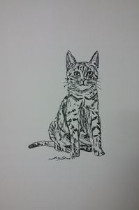 Original Cat Pen and Ink Drawing