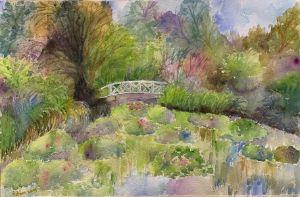 My Summer Lily Pond