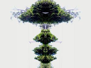 trees 00009 (50)