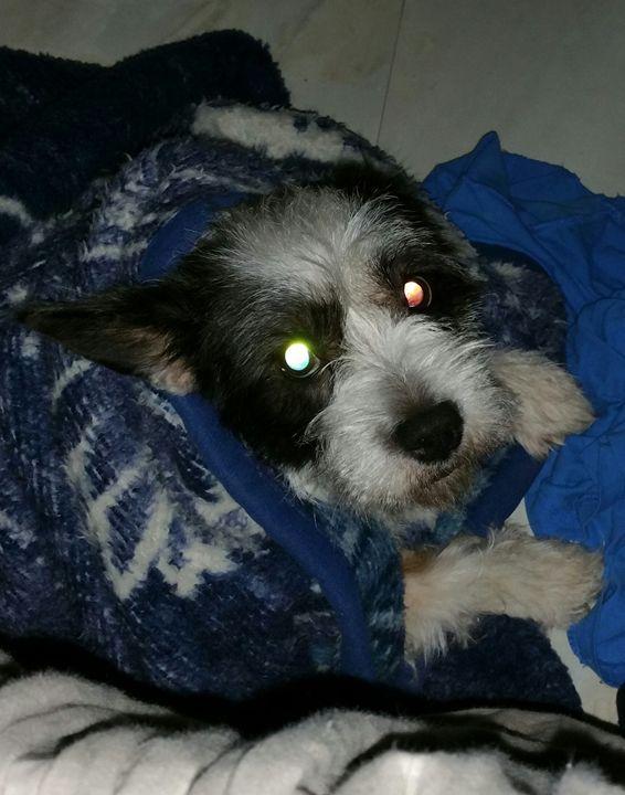 Kaiya in a blanket - mewmewtrey