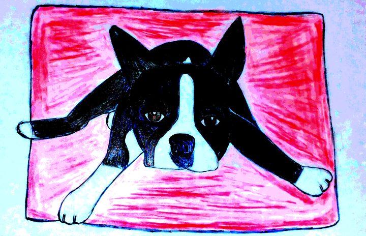 Boston terrier - mewmewtrey