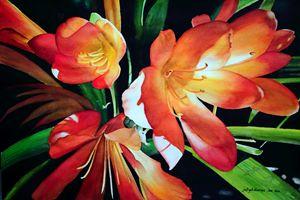 Orange Lily I