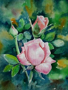 Pink Roses 617