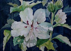 White Chiffon Hibiscus - Jelly's Arts