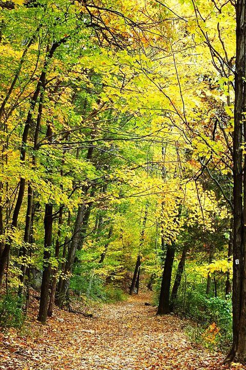 The Path I Take - Ada