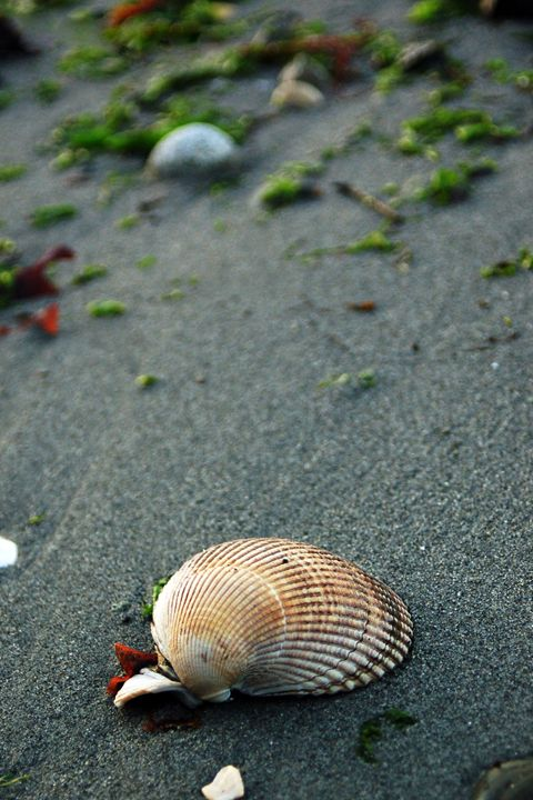 Clam Shell - Brittany Megis Photography
